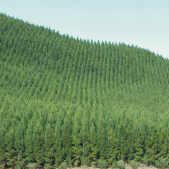 irani-plantations.jpg